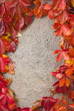 De herfst abstract kader Muur en bladeren Royalty-vrije Stock Fotografie
