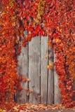 De herfst abstract kader Omheining en bladeren Stock Afbeeldingen