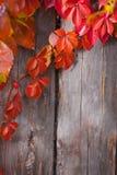 De herfst abstract kader Omheining en bladeren Royalty-vrije Stock Fotografie