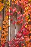 De herfst abstract kader Omheining en bladeren Royalty-vrije Stock Afbeelding
