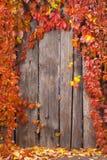 De herfst abstract kader Omheining en bladeren Royalty-vrije Stock Afbeeldingen
