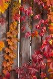 De herfst abstract kader Omheining en bladeren Stock Fotografie