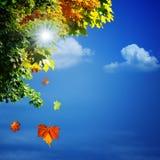 De herfst, abstracte natuurlijke achtergronden royalty-vrije stock foto