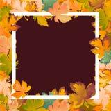 De herfst de achtergrondlay-out verfraait bladeren het winkelen verkoop of promoaffiche en wit kaderpamflet, Webbanner Vector Stock Fotografie