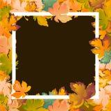 De herfst de achtergrondlay-out verfraait bladeren het winkelen verkoop of promoaffiche en wit kaderpamflet, Webbanner Vector Stock Foto's