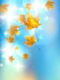 De herfst achtergrondmalplaatje. Stock Afbeeldingen
