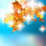 De herfst achtergrondmalplaatje. Stock Foto's