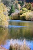 De herfst, Adelaide Heuvels Stock Afbeelding