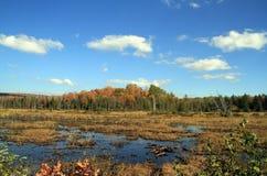De herfst in Adirondack-Park stock afbeelding