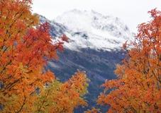 De herfst in Alaska Stock Afbeelding