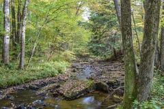 De herfst in Alleghenies Royalty-vrije Stock Foto