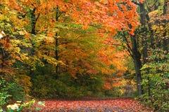 De herfst in Allegheny royalty-vrije stock foto's