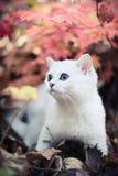De herfst & katje Stock Afbeelding