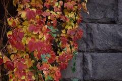 De herfst in Armeni? stock fotografie