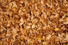 De herfst (backgroung) Royalty-vrije Stock Afbeelding