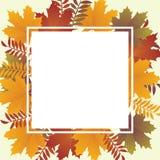 De herfst backround Stock Afbeeldingen