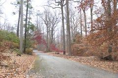 De herfst beboste Weg Stock Afbeelding