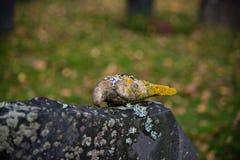 De herfst in de begraafplaats van Filipstad Zweden Royalty-vrije Stock Fotografie