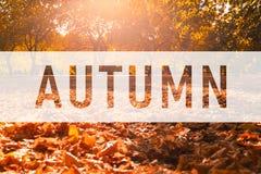 De herfst, begroetende tekst op kleurrijke dalingsbladeren royalty-vrije stock foto