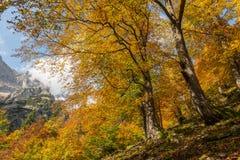 De herfst in Beieren, Duitsland Royalty-vrije Stock Foto's