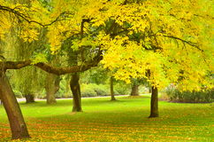 De herfst in Belfast Royalty-vrije Stock Afbeelding