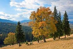 De herfst in berg Royalty-vrije Stock Foto's