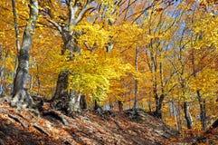 De herfst in de bergen JesenÃky, Sternberk, Tsjechische Republiek royalty-vrije stock foto
