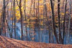 De herfst in beukbos Stock Afbeelding