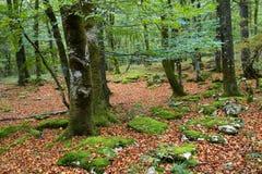 De herfst bij Baskisch Land royalty-vrije stock afbeeldingen