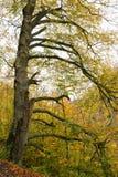 De herfst bij de bergen van de Pyreneeën Stock Fotografie