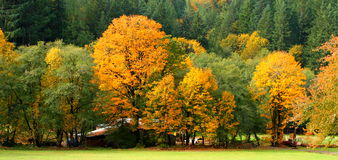 De herfst bij het landbouwbedrijf Royalty-vrije Stock Foto's