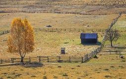 De herfst bij het Landbouwbedrijf Stock Foto