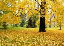 De herfst bij het park Stock Afbeeldingen