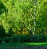 De herfst bij het park Stock Foto's