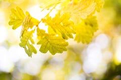De herfst bij meer royalty-vrije stock foto