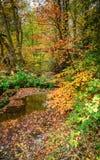 De herfst bij Pegwhistle-Brandwond in Plessey-Hout stock foto