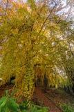 De herfst bij zijn beste royalty-vrije stock afbeelding