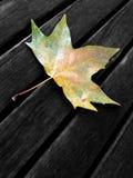 De herfst, blad op een bank Stock Afbeelding