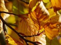 de herfst bladeren stock fotografie