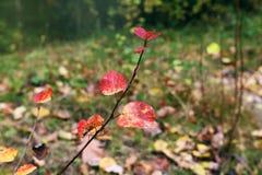 De herfst Bladeren in het bos Stock Fotografie