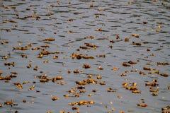 De herfst Bladeren op Vijver Stock Foto's