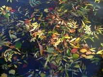 de herfst bladeren op water stock afbeelding