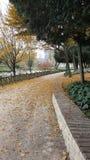 De herfst, bladeren is in plaatsen Stock Afbeeldingen