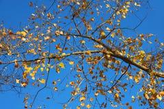 De herfst in blauwe hemel Stock Afbeeldingen