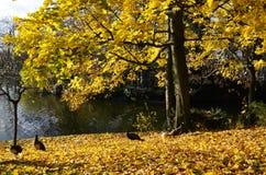 De herfst in Bois de Vincennes stock afbeelding