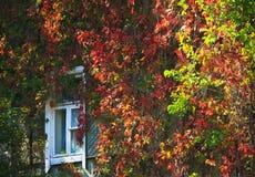 De herfst bokeh 14 stock foto's