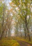 De herfst bokeh 3 stock foto