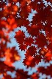De herfst bokeh 8 stock foto's