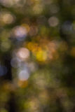 De herfst bokeh 3 Royalty-vrije Stock Foto's