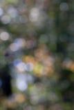 De herfst bokeh 2 Stock Afbeeldingen